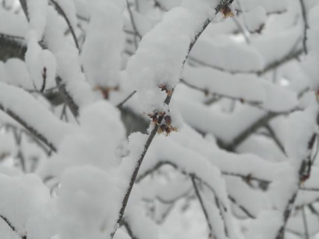 Blooms Under Snow