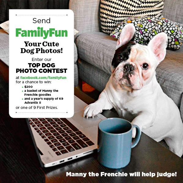 Two Days Left to Enter the Family Fun Dog Contest