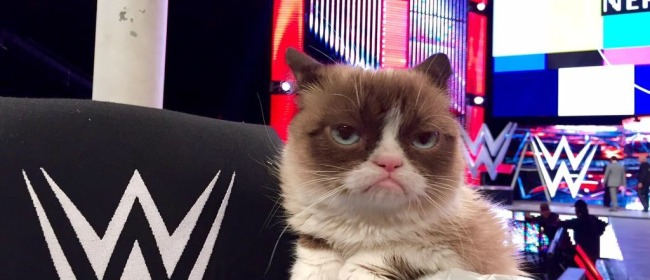 Photos of Grumpy Cat's WWE Raw Visit