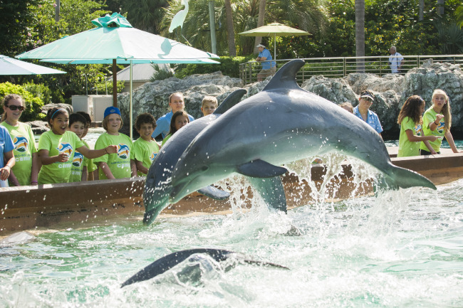 Make a Splash This Summer with SeaWorld Camp