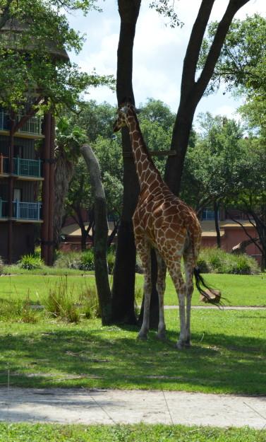 5 Things I Learned About Animal Kingdom Lodge #MonkeyKingdomEvent