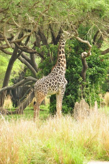 Wild Africa Trek 113