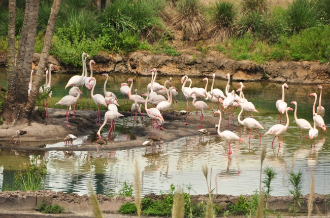 Wild Africa Trek 137