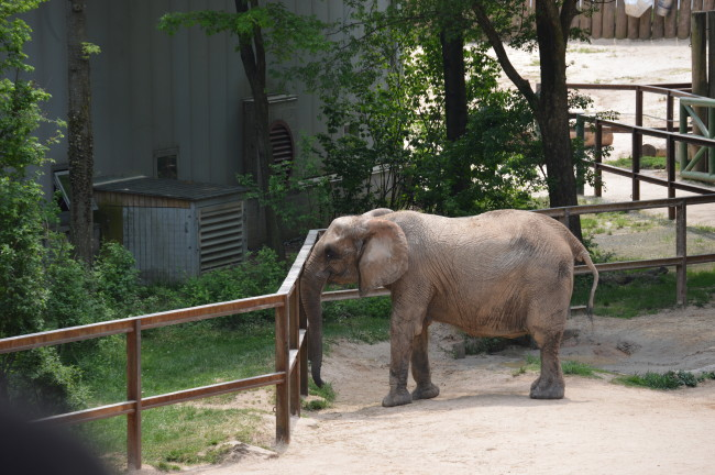 Maryland Zoo (37)